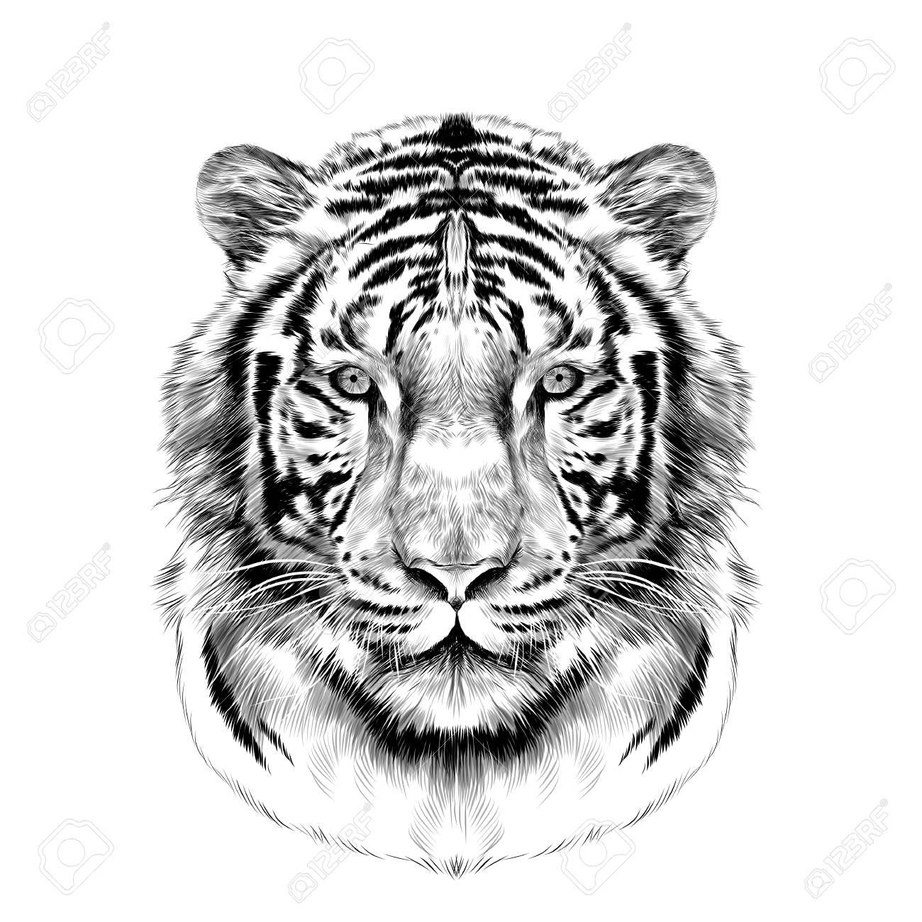 Dessin Crayon Tigre Fonds D Ecran Art Crayon Fonds D Ecran