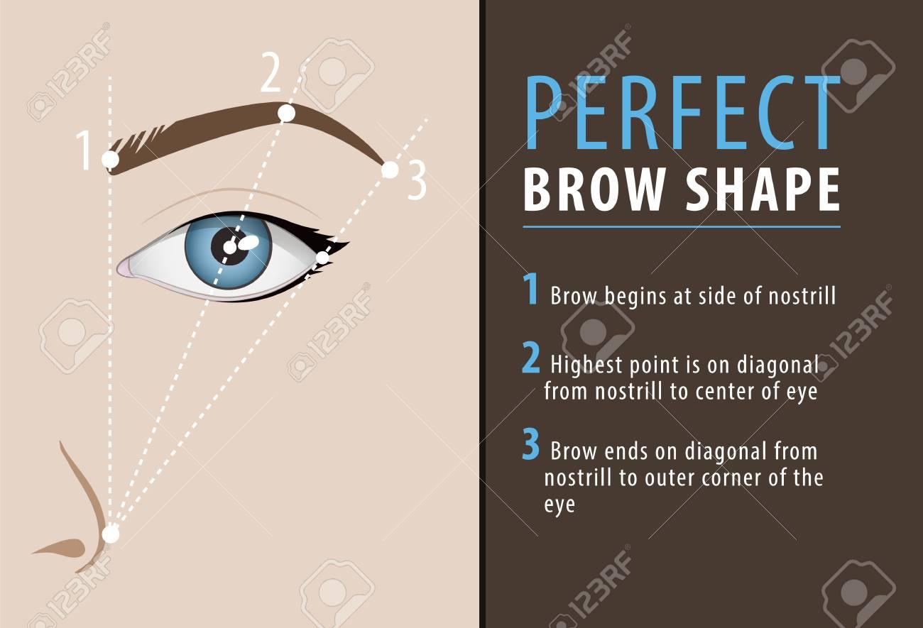 Perfect Eyebrow Shape Tutorial Vector Template