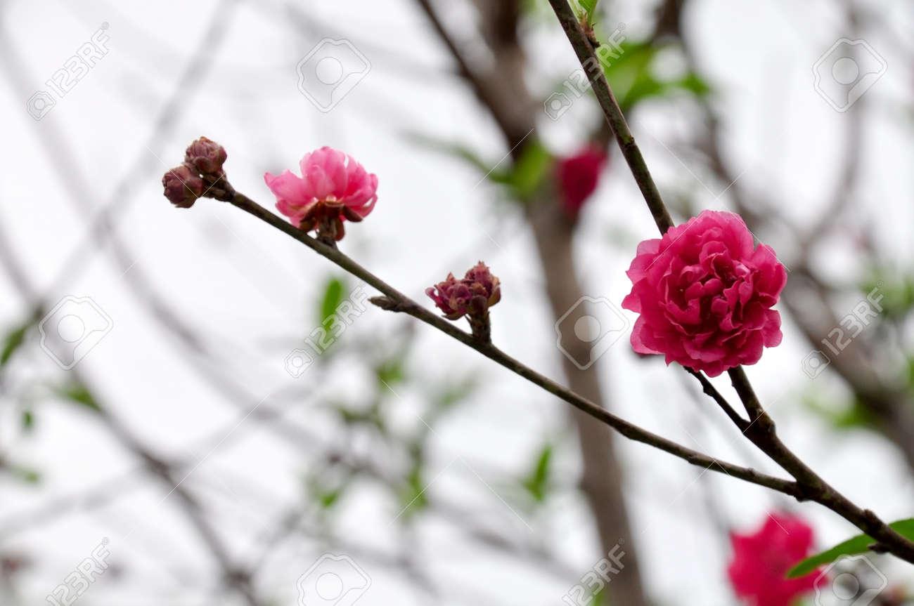 taiwan asiatique parc naturel exterieur fleur rouge rose noir en feuilles belle plante fleurie