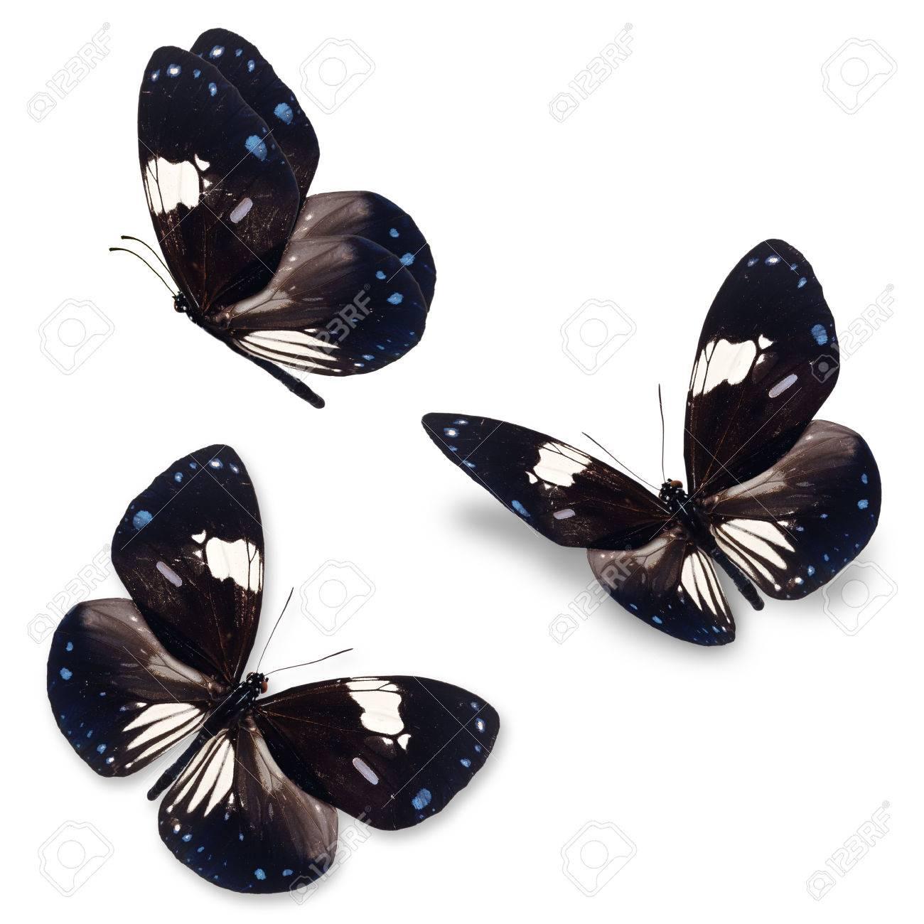 belle trois papillon noir et blanc isole sur fond blanc