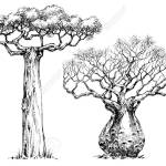 African Iconic Tree Baobab Tree Royalty Free Cliparts Vectors And Stock Illustration Image 55852473