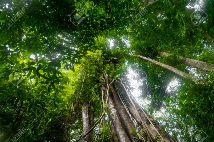 Rainforest In The Jungle Of Bukit Lawang North Sumatra Indonesia Stock Photo Picture And Royalty Free Image Image 119681833