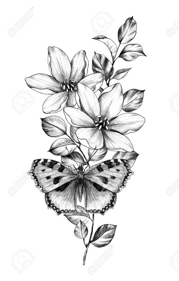 Hand Drawn Butterfly With Flowers Isolated On White Background ...