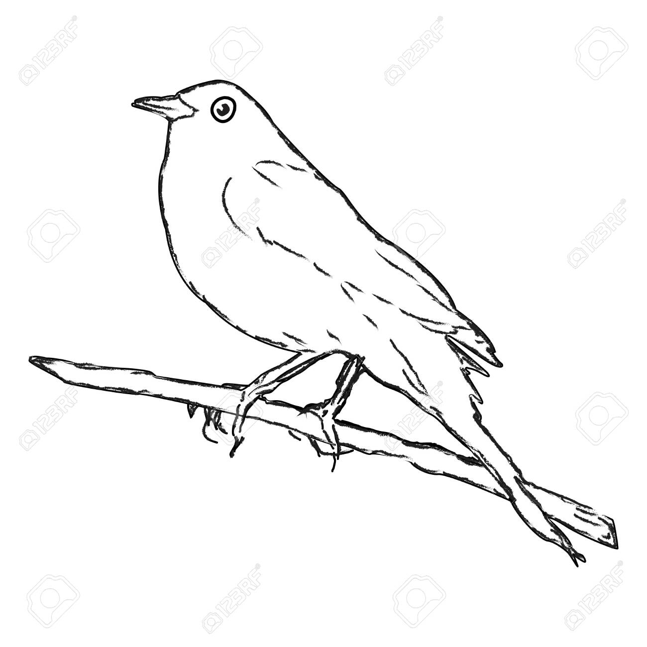 Bird On A Branch A Simple Drawing With A Contour Line Royalty Free Cliparts Vectors And Stock Illustration Image 133284087