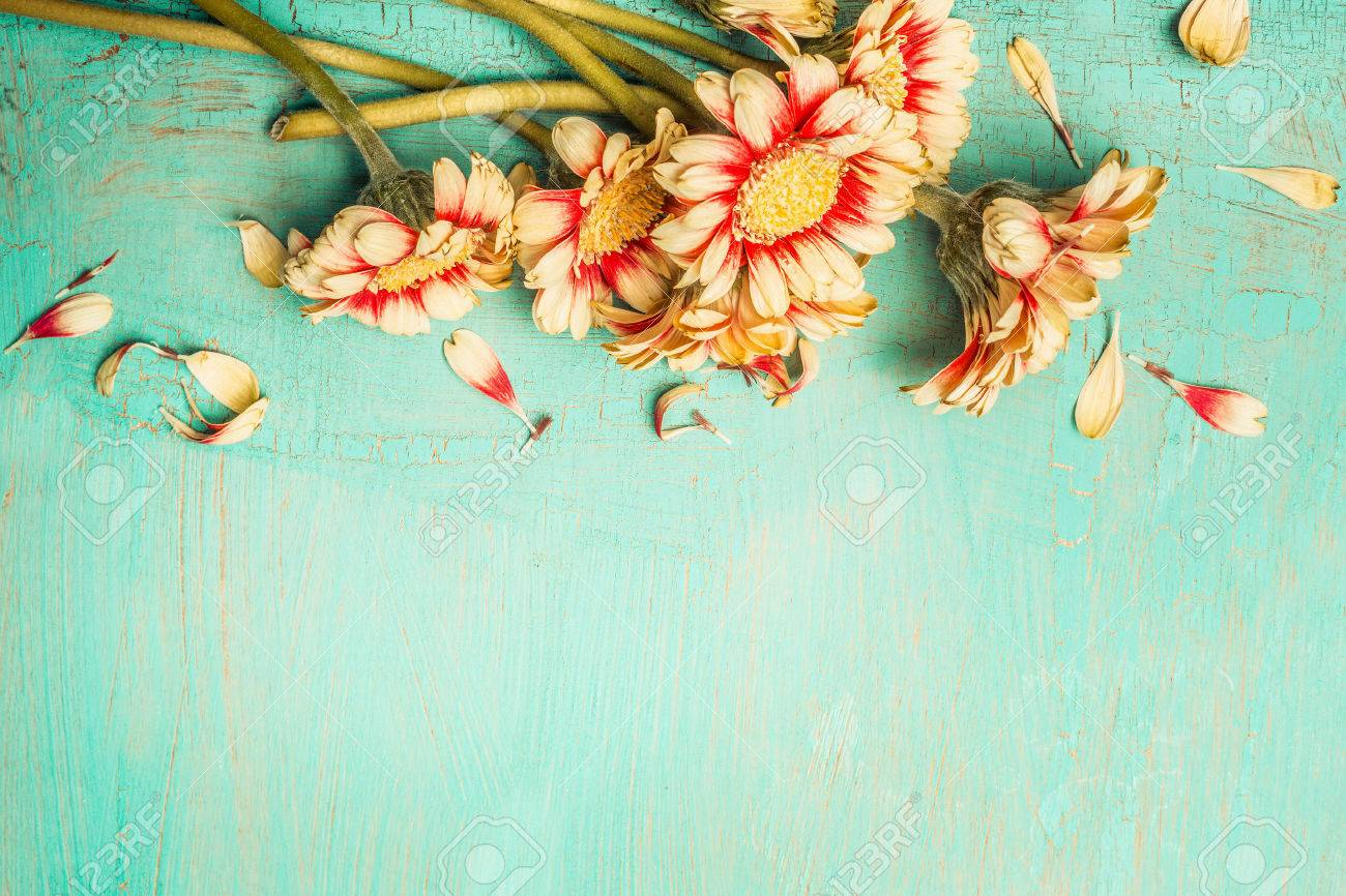 Beautiful Flowers Bunch On A Turquoise Shabby Chic Background     Beautiful flowers bunch on a turquoise shabby chic background   top view   border  Festive