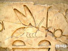 Hieroglyph of a bee from an inscription. According to Egyptian mythology,  Stock Photo, Picture And Rights Managed Image. Pic. UIG-951-05-26968060 |  agefotostock
