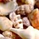 Golden Wedding Rings On Shells.