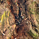 Ants on Tree 2