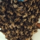 Large Swarm Of Bees At Front Door Of House