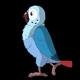 Blue Parrot Walks