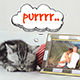 Little Cats Slideshow