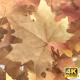 Autumn Leaf Reveal