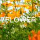 Yellow Flowers 2
