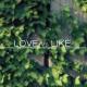 Love Vs Like