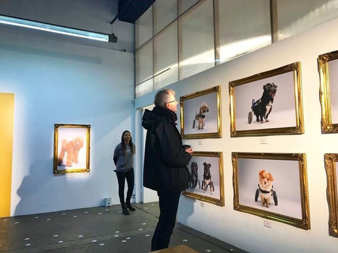 National Paw-trait gallery