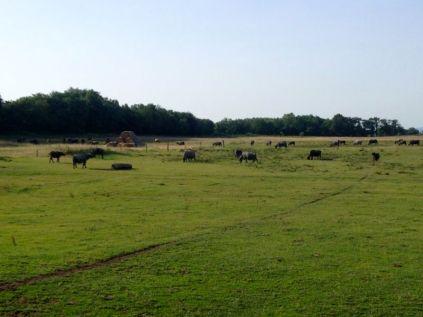 the buffalo reserve - for Sascha's birthday :)