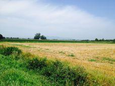 Across_Slavonia25
