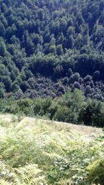 Jajce-Mountain-Travnik25