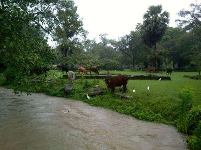 Kalpitiya_Anuradhapura074