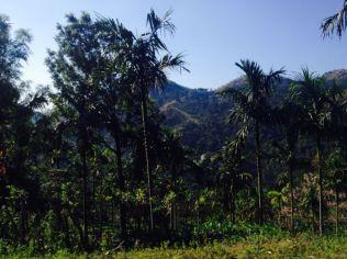 Kerala045
