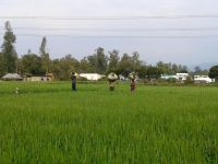 women carrying crops