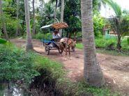 Mekong-Delta-056