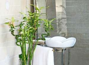 Plants filter toxins in your bathroom on a budget