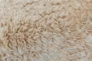 White rug.