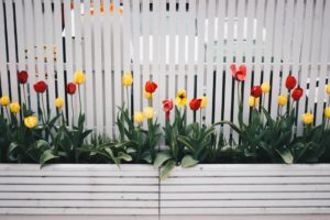 potted plants as a way to decorate your garden