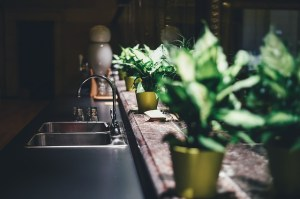 Plants in the kitchen.
