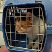 A cat in a carrier