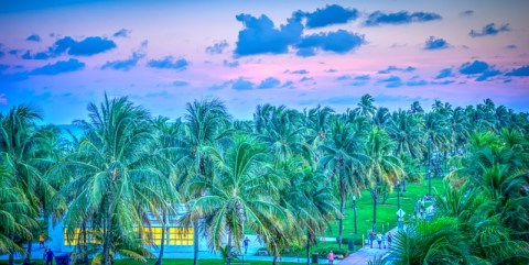 Palm tree forest in Florida