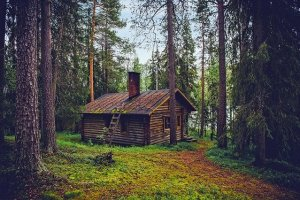 Cabine in the wood