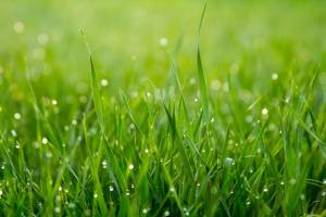 green grass, read about backyard makeover tips