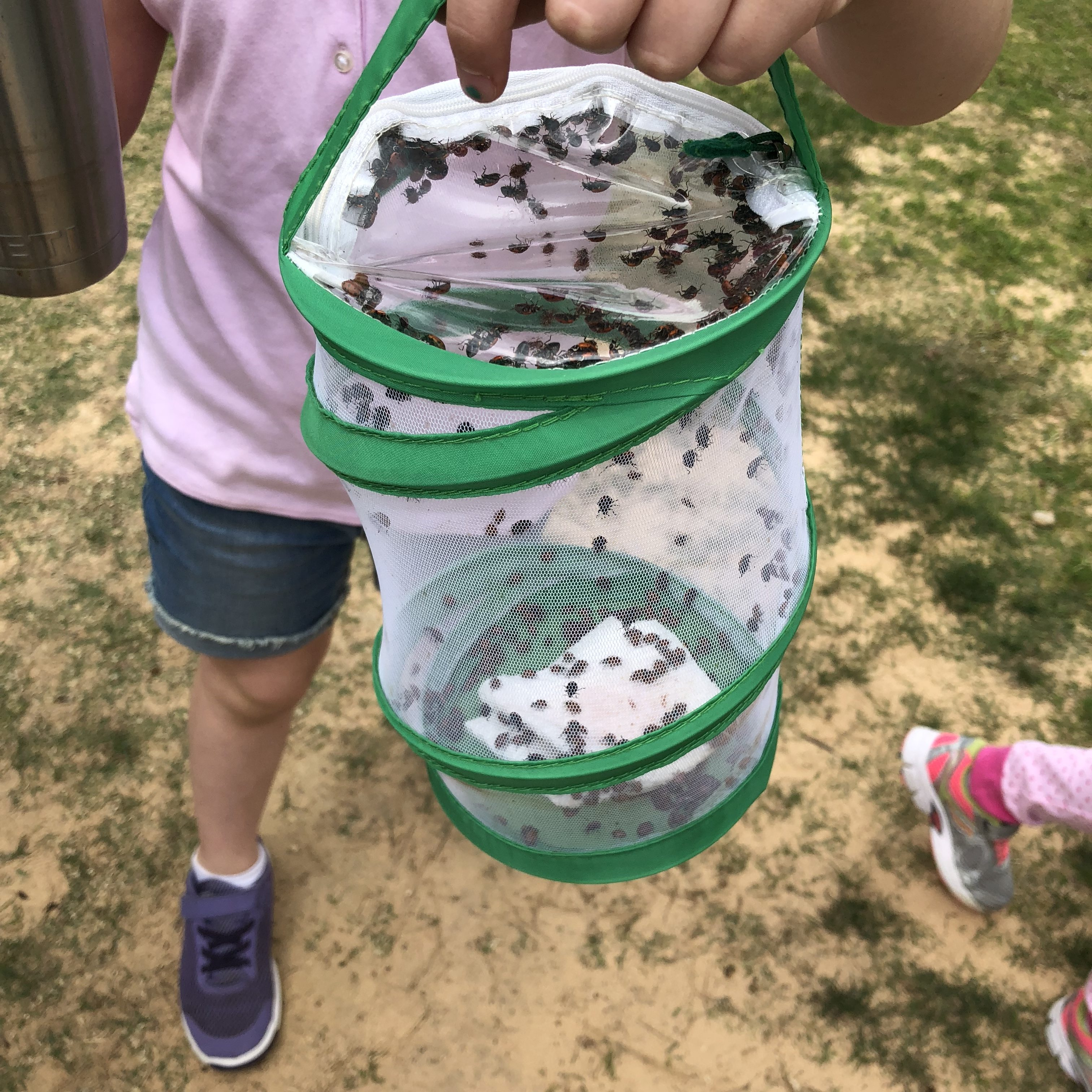 Life Cycle Activities For Kids Plants And Animals