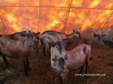 Osim koza, stanari ove farme su i laste
