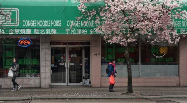 Congee.Cherry.Tree
