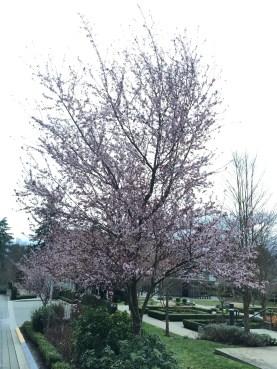 Spring2016 - 2