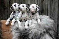 Flinga med sina två systrar