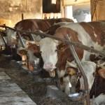 Dodatnih 220 milijuna kuna potpora za stočare