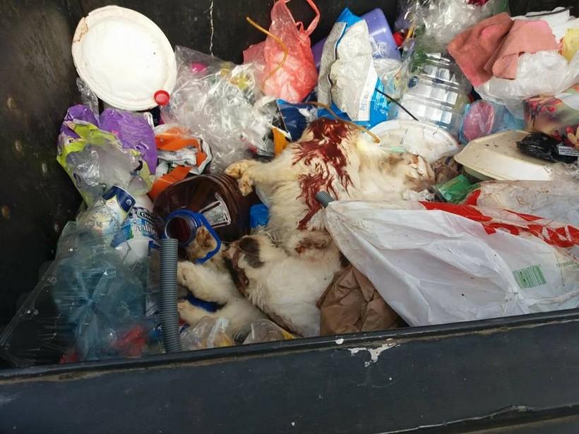 Siget-ubijene macke-Cats help FB-1