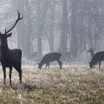 Upucao 10 godina starog jelena; policija traži počinitelja