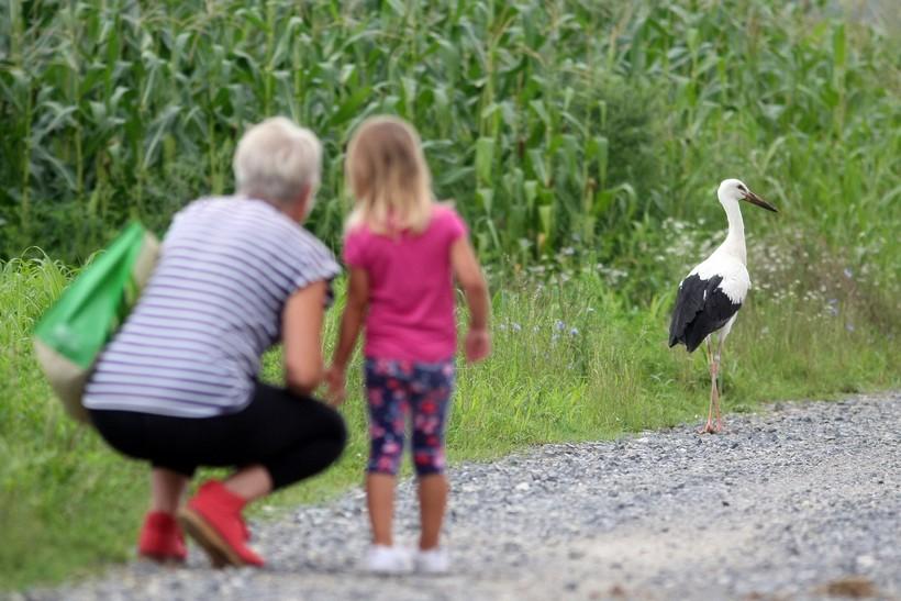 Sve manje ptica na poljoprivrednim površinama; u 20 godina smanjio im se broj za 17 posto