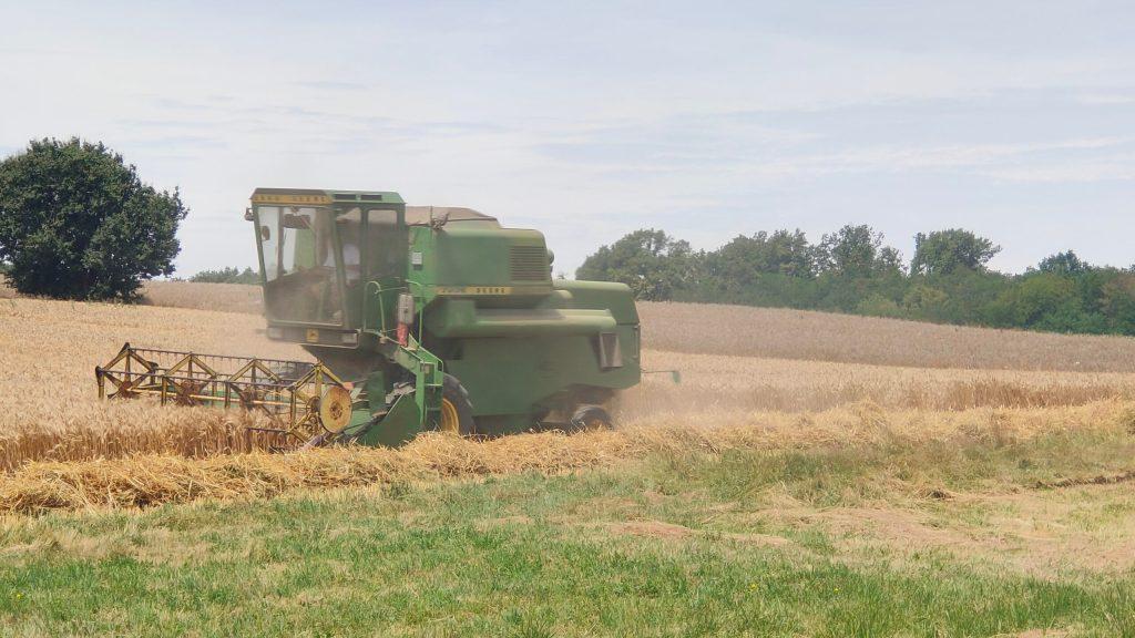 Zaustavljena žetva zobi i pšenice