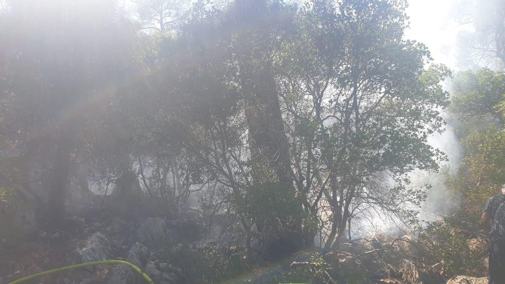 Gorjela šuma na Marjanu