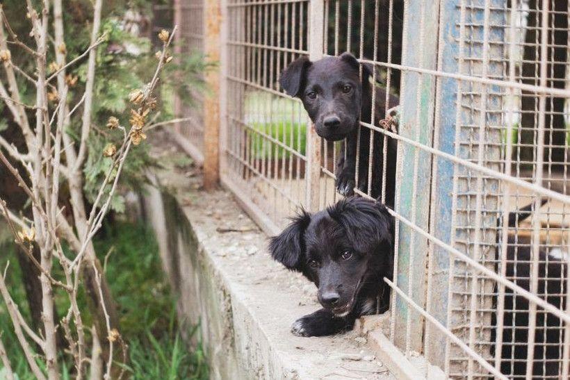 Prijatelji životinja pozivaju na obilježavanje Međunarodnog dana životinja bez doma