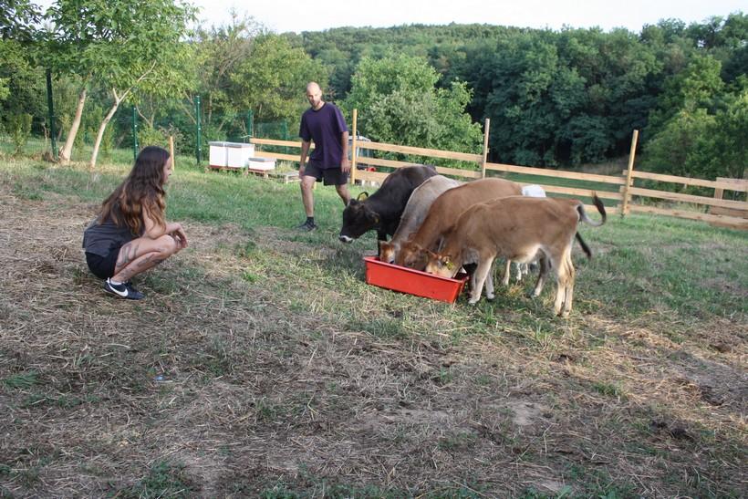 Krave buše u Kamenici: 'Nepravedno su zaboravljene i zanemarene u našim krajevima'