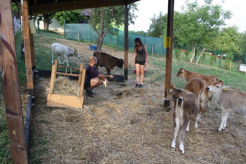 krave buše (3)