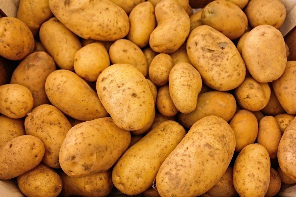 ZBOG SUŠE I TEMPERATURA Krumpira će biti čak 70 posto manje, a cijene se penju