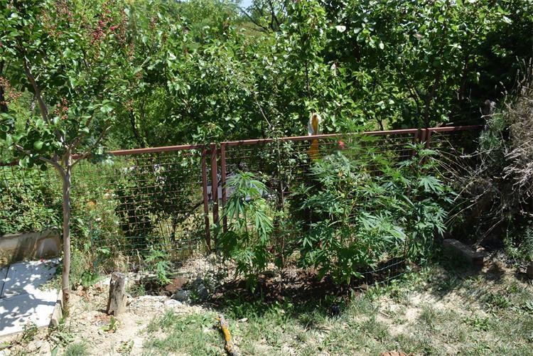 U kući pronašli 13 stabljika i 293,1 grama marihuane te 2,0 grama droge amfetamina